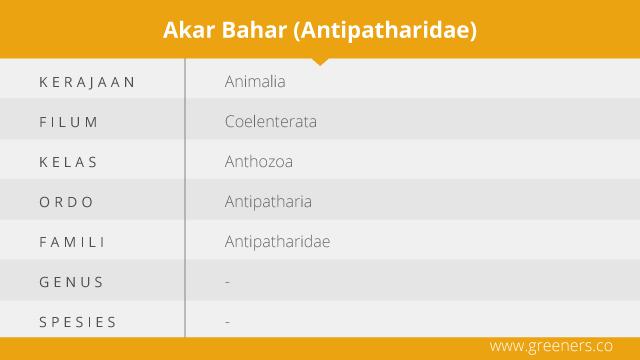 Taksonomi Akar Bahar