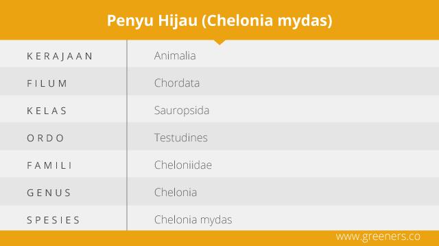 Taksonomi Penyu Hijau