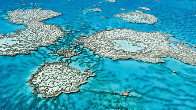 LIPI Tanggapi Temuan 50 Persen Terumbu Karang Rusak di Great Barrier Reefs
