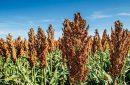Pakar: 40 Persen Flora Dunia Terancam Punah