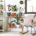 Lima Manfaat Kesehatan Memelihara Tanaman dalam Rumah