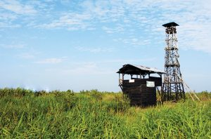 Pakar Desak Pemerintah Gunakan Metodologi Baru dalam Restorasi Alam