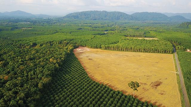 LSM: RUU Cipta Kerja Berpotensi Lenyapkan Hutan Alam