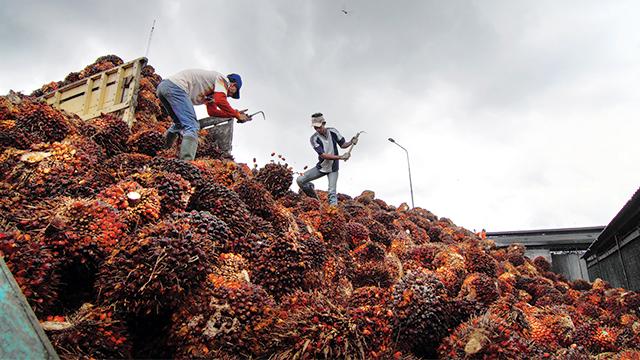 LSM: Pemerintah Harusnya Fokus Atasi Sengkarut Izin Hutan
