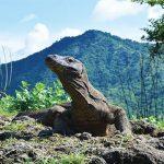 Peneliti LIPI Kritisi Nihilnya Kajian Penataan Sarpras Proyek Pulau Rinca