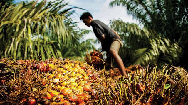 Aktivis: Kesejahteraan Petani Sawit Bukan Prioritas Pengembangan Biodiesel