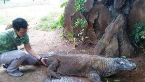 Hari Cinta Puspa dan Satwa Nasional, Dr. Amir Hamidy Soroti Tren Pelihara Reptil