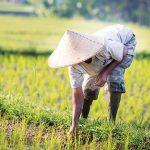 Aktivis: UU Cipta Kerja Berpotensi Menyengsarakan Masyarakat Desa