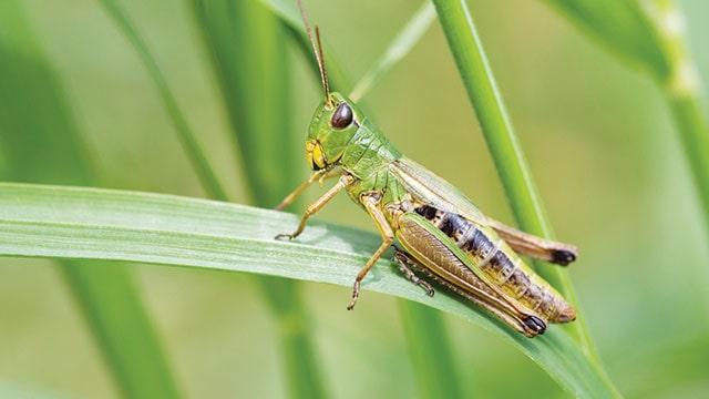 foto belalang di atas rumput