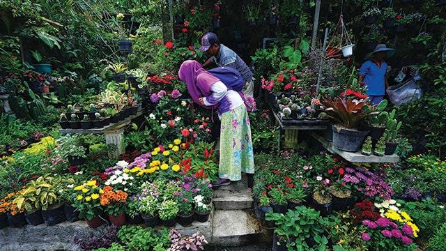 Potensi flora dan penjual tanaman