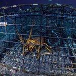 Korupsi Benih Lobster, Lobster di dalam Kandang