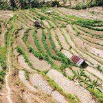 Pemerintah Daerah Butuh Sokongan untuk Definisikan Regulasi Perubahan Iklim