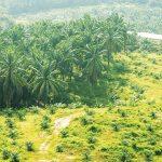 Menengok Penataan Perkebunan Sawit dalam Kawasan Hutan pada UU Cipta Kerja