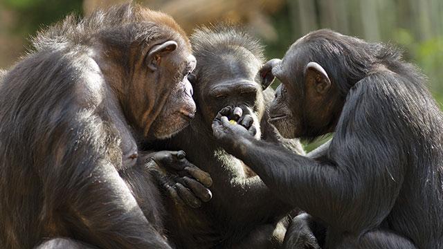 Belajar Demokrasi dari Binatang