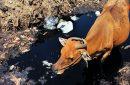 Hari Toilet Sedunia, Praktisi Soroti Pengelolaan Air Limbah