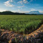 Balingtan Gali Potensi Pestisida Nabati untuk Ketahanan Pangan