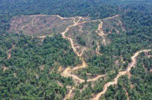 RAN mencatat setidaknya sembilan perusahaan yang melakukan deforestasi di kawasan Aceh Timur.