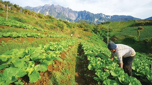 Walhi: Permen Pembangunan Food Estate Perdalam Masalah Lingkungan