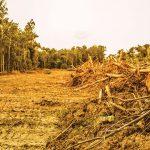 Aktivis Pantau Pengaruh UU Cipta Kerja terhadap Komitmen Iklim Indonesia
