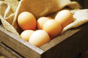 Healthy Eggs: Konsumsi Telur Enak dari Ayam Sehat dan Bahagia