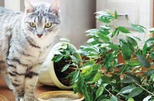 tanaman hias yang aman untuk hewan peliharaan