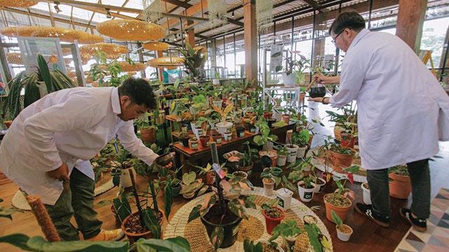 plantasia bottlesmoker