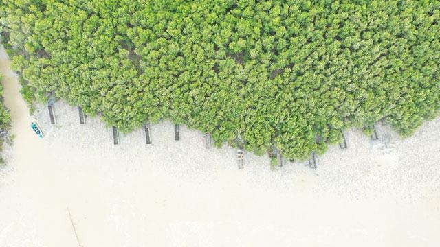 mangorve di gresik