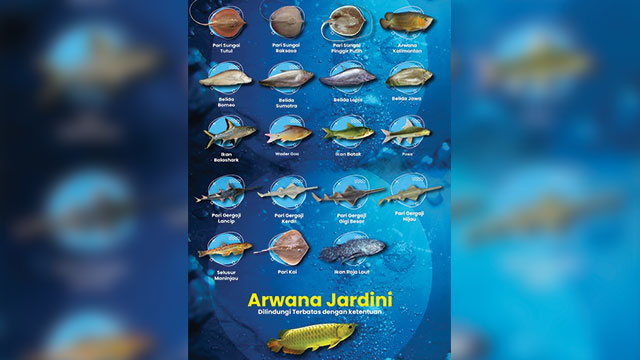 ikan arwana dilindungi negara