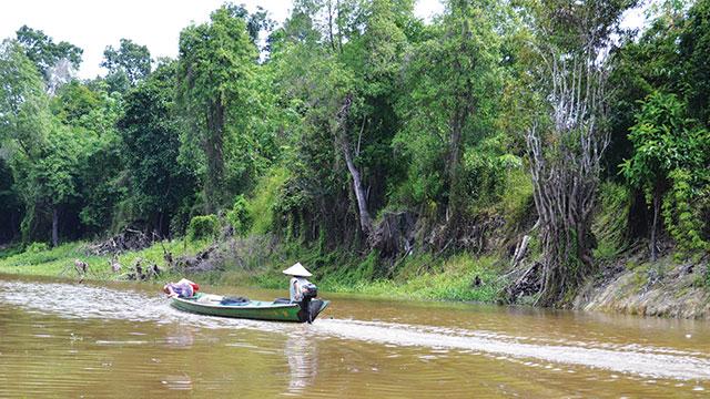 dataran rendah mangrove