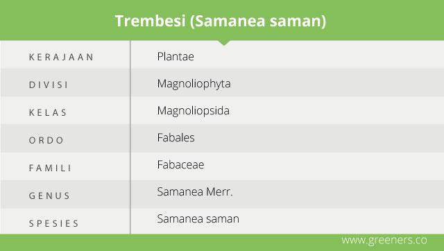 taksonomi pohon trembesi