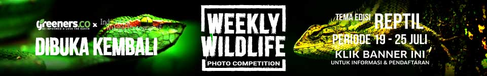 Weekly Wildlife Photo Competition - Greeners.co