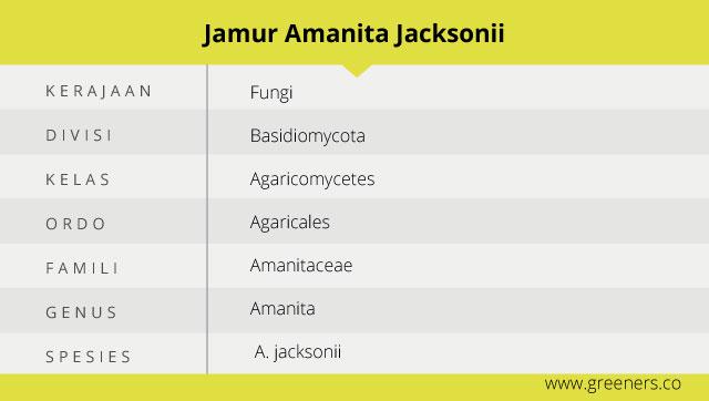 Taksonomi Amanita Jacksonii